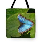 Blue Morpho Butterfly II Tote Bag