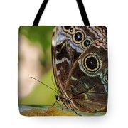Blue Morpho Butterfly Morpho Peleides  Tote Bag
