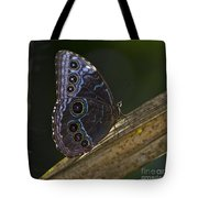 Blue Morpho.. Tote Bag