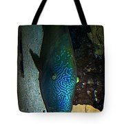 Blue Parrot Fish Tote Bag