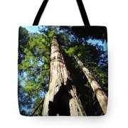 Blue Sky Big Redwood Trees Forest Art Prints Baslee Troutman Tote Bag