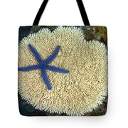 Blue Starfish Tote Bag
