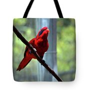 Blue-streaked Lory Tote Bag