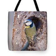 Blue Tit Leaving Nest Tote Bag by Cliff Norton