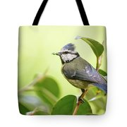 Blue Tit With Caterpillar Tote Bag