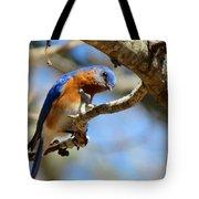 Bluebird Curiousity Tote Bag