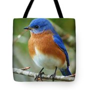 Bluebird On Branch Tote Bag