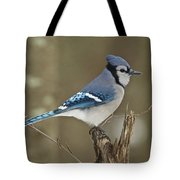 Bluejay 012 Tote Bag