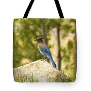 Bluejay Pondering Tote Bag