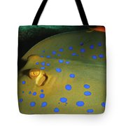 Bluespotted Ribbontail Ray  Tote Bag