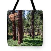 Bluff Lake Ca Fern Forest 2 Tote Bag