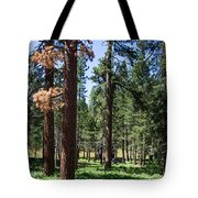 Bluff Lake Ca Fern Forest 3 Tote Bag