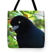 Boat Tailed Grackle Close Up Tote Bag