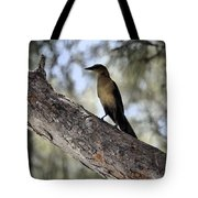 Boat - Tailed Grackle  Tote Bag