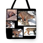 Bob Cat Tote Bag