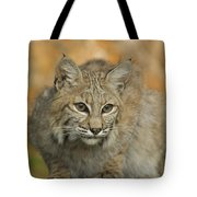 Bobcat Felis Rufus Tote Bag by Grambo Photography and Design Inc.