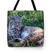 Bobcat In The Grass 2 Tote Bag