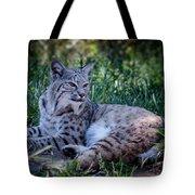 Bobcat In The Grass Tote Bag