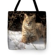 Bobcat In The Snow. Tote Bag