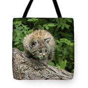 Bobcat Kitten Exploration Tote Bag by Sandra Bronstein