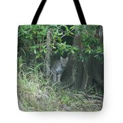 Bobcat In The Everglades Tote Bag