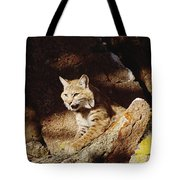 Bobcat Lynx Rufus Portrait On Rock Tote Bag