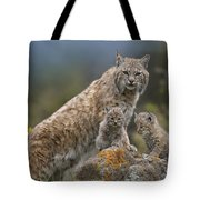 Bobcat Mother And Kittens North America Tote Bag