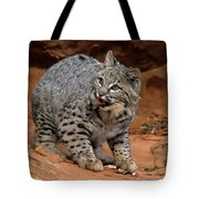 Bobcat Ready--and Willin' Tote Bag