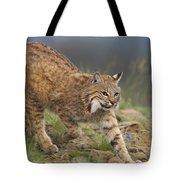 Bobcat Stalking North America Tote Bag by Tim Fitzharris