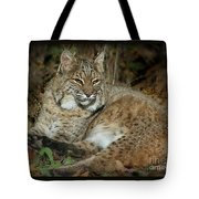 Bobcat Warming In The Autumn Sun Tote Bag
