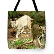 Bobcats Begin To Hunt Tote Bag