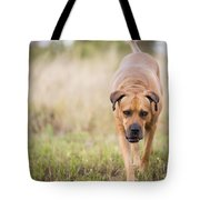 Boerboel Dog Tote Bag