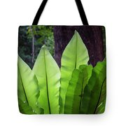 Bold Fronds 11 Tote Bag