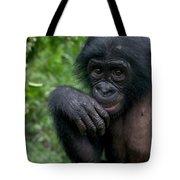 Bonobo Pan Paniscus Juvenile Orphan Tote Bag