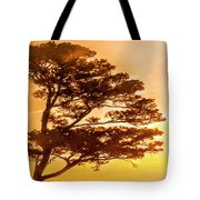 Bonsai Pine Sunrise Tote Bag