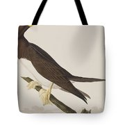 Booby Gannet   Tote Bag