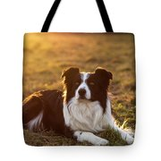 Border Collie At Sunset With Warm Colors Tote Bag