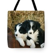 Border Collie Puppies Tote Bag