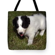 Border Collie Puppy Tote Bag by Sally Weigand