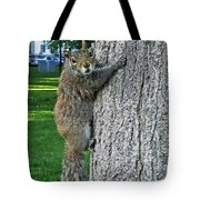 Boston Common Squirrel Hanging From A Tree Boston Ma Tote Bag