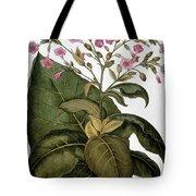 Botany: Tobacco Plant Tote Bag