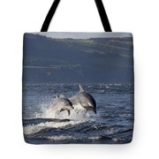 Bottlenose Dolphins Leaping - Scotland  #37 Tote Bag