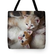 Box Full Of Kittens Tote Bag