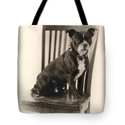 Boxer Sitting On A Chair Tote Bag