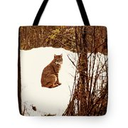 Bobcat In Snow Tote Bag