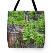 Bracken Fern Meadow Tote Bag