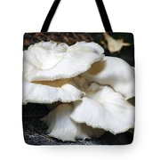 Bracket Fungus Tote Bag