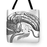 Brain And Eye, Descartes, Illustration Tote Bag