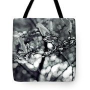 Branch With Seed Pods Tote Bag