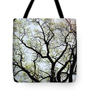 Branches Against Sky In Spring Outback Tote Bag